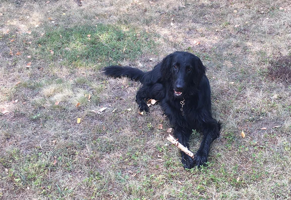 Arya liegt mit einem Stöcken zwischen den Pfoten im Garten und blickt in die Kamera
